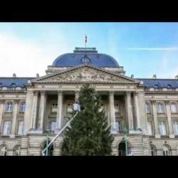 Kerstboom / Sapin de Noël